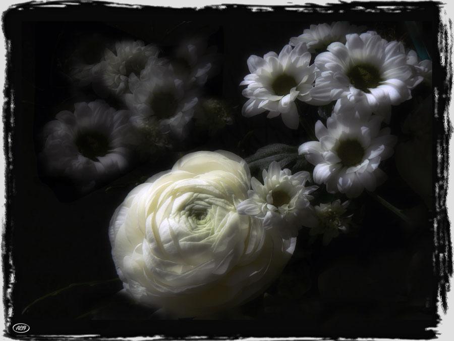 Blumen aus dem Traum...