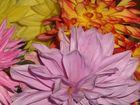 Blumen aus Nachbars Garten