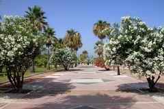 Blumen Baum Promenade