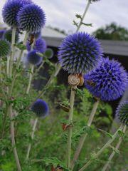 Blumen Bienen und Schnecken