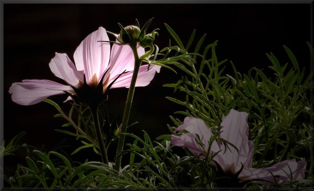 Blumen brauchen kein Make up