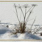 Blumen des Winters