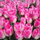 Blumen die niemals welken....