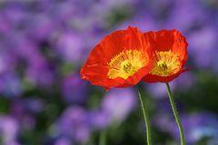 Blumen-Ehe