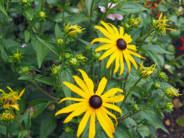 Blumen erfreuen das auge - wann und wo immer man sie sieht!