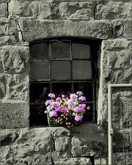 Blumen Fenster I