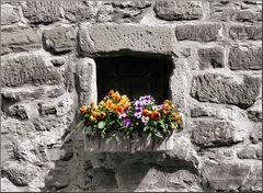 Blumen Fenster II