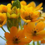 Blumen (flores)
