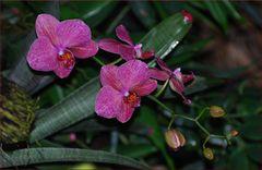 Blumen für den Mittwoch