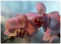Blumen für die Damen