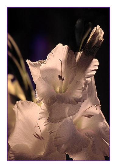 Blumen für die Damen!