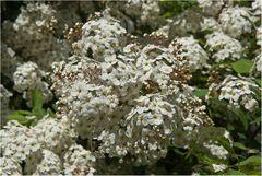Blumen für die Mütter