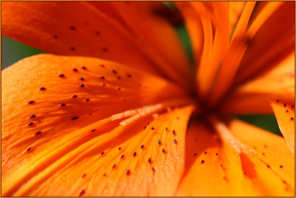 Blumen für