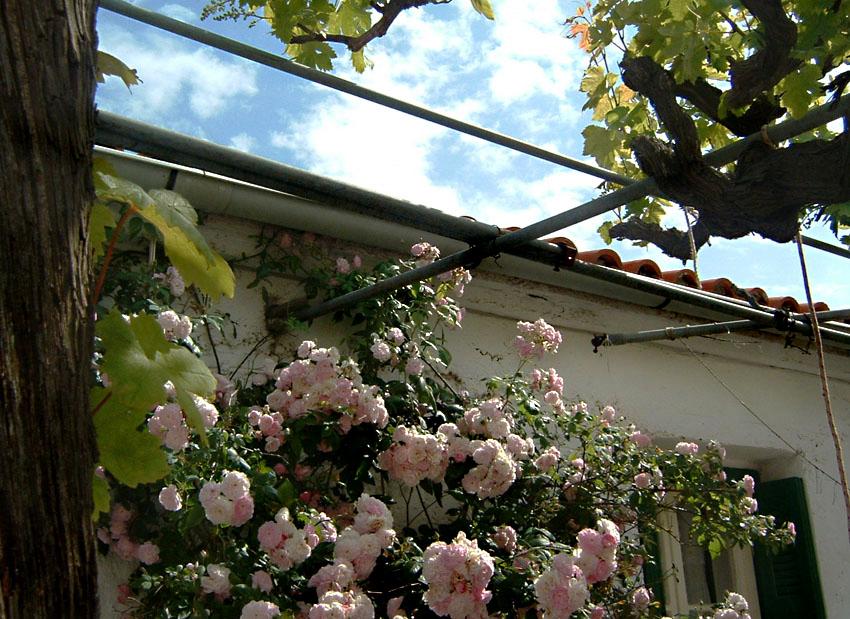 Blumen für meine Freunde in der Fotocommuniy