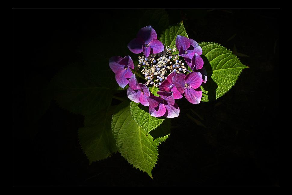 Blumen für meine Liebste