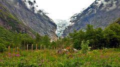 Blumen & Gletscher