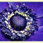 Blumen haben ihre eigene Welt und machen Menschen immer eine Freude!