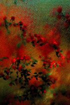 Blumen hinter Glas (Nachbearbeitung)
