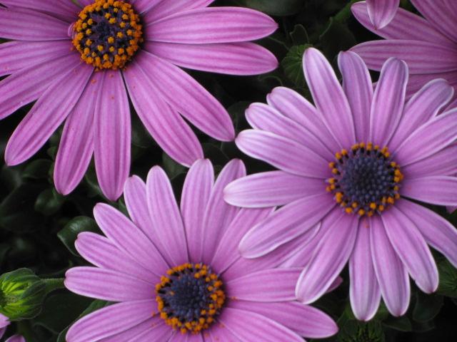 Blumen Im April Foto Bild Pflanzen Pilze Flechten Bluten