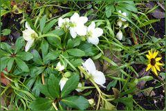 Blumen im Februar in meinem Garten