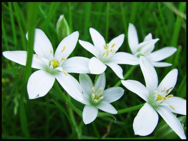 """"""" Blumen im Garten ... """""""