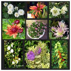 Blumen im Garten - am 1. November 2015 - so viele gab es an diesem Tag noch nie
