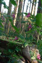 Blumen im Grünen