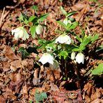 Blumen im März