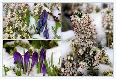 Blumen im Schnee 2