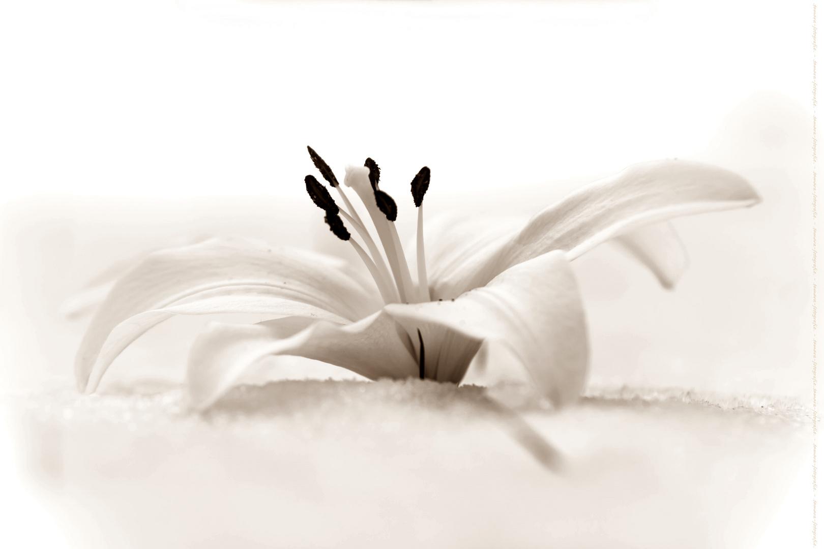 blumen im schnee foto bild kalt winter natur bilder. Black Bedroom Furniture Sets. Home Design Ideas