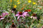 Blumen im September-Sonnenschein