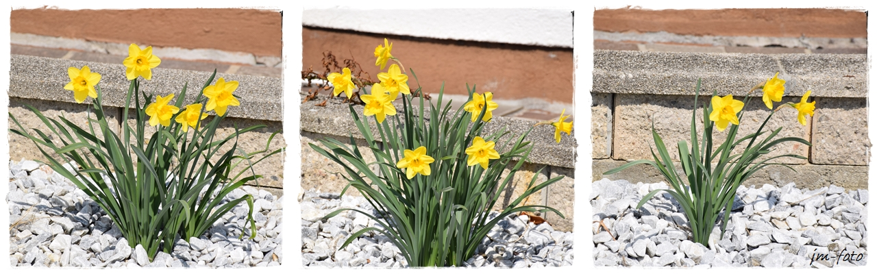 Blumen im Steingarten Foto & Bild | pflanzen, pilze & flechten ...