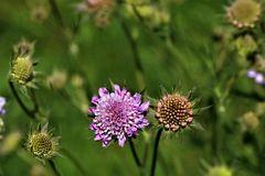 ~~ Blumen im Wind ~~