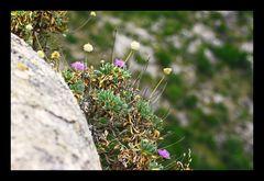 Blumen in der Tramuntana