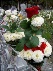 Blumen in Lourdes