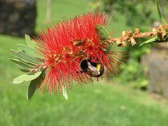Blumen in Madeira I