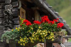 Blumen in Südtirol