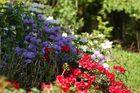 Blumen in unserem Garten 3