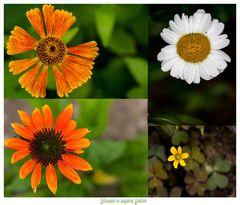 Blumen in unserm Garten