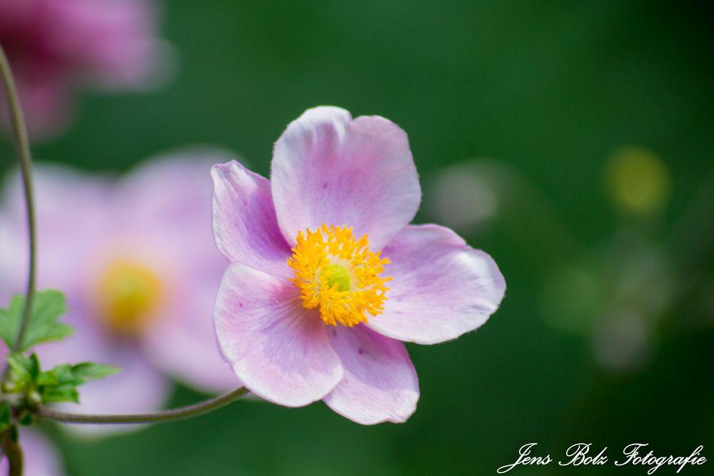 Blumen IV