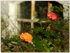 """Blumen können """"verzaubern""""..."""