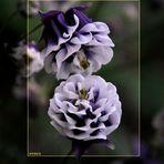 Blumen-küssen