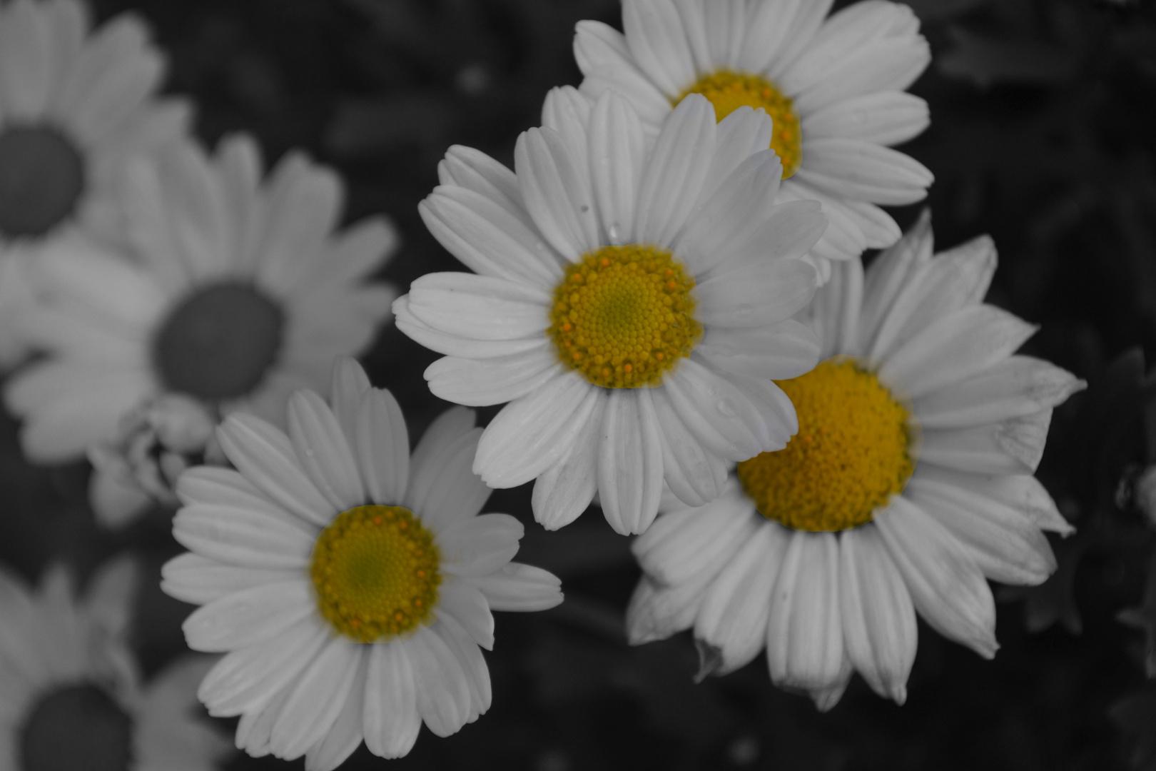 Blumen mal Anders