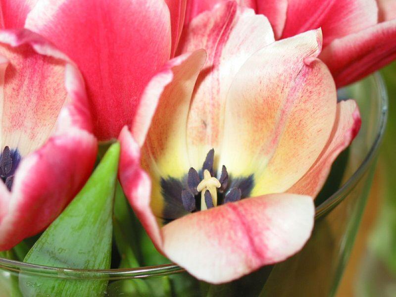Blumen mit Glasvase