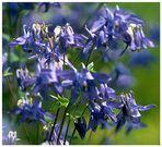 Blumen :o)