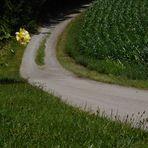 Blumen pflastern den Weg