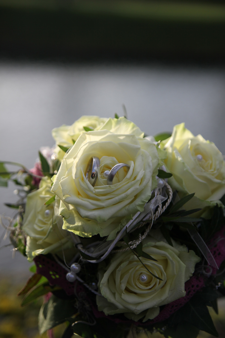 Blumen Ringe Foto Bild Hochzeit Unterwegs Rosen Bilder Auf