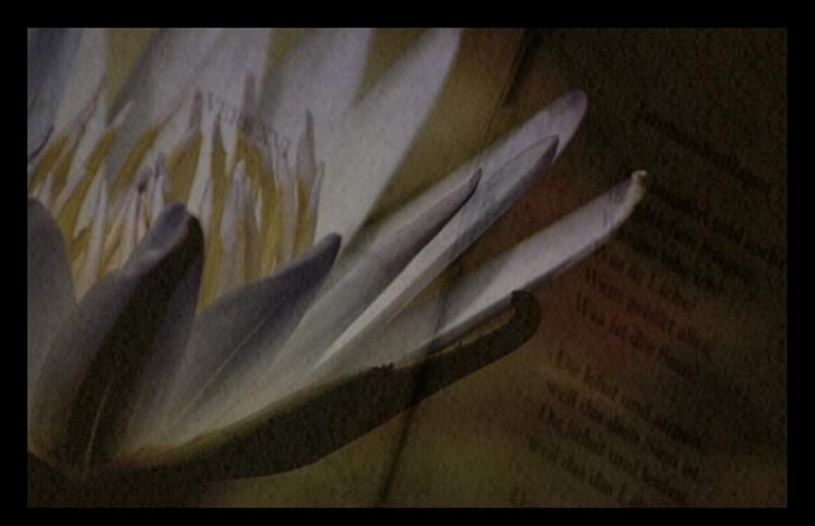 Blumen sagen mehr als 1000 Worte