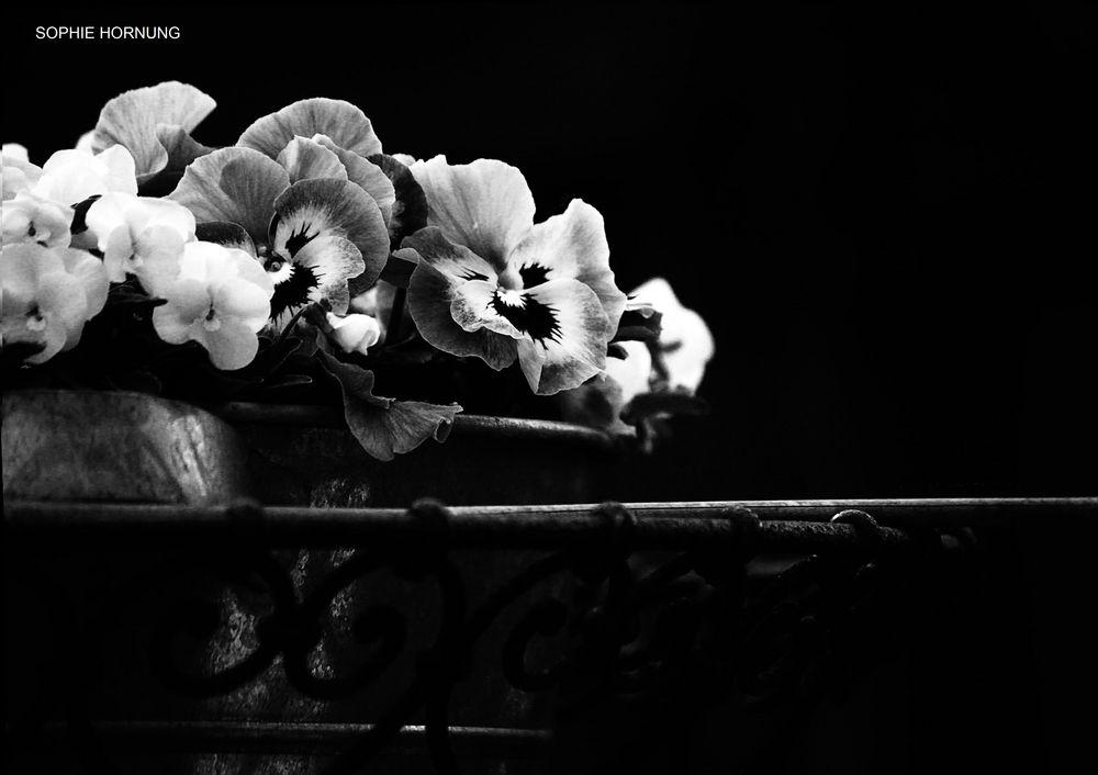 Blumen Schwarz-Weiß Foto & Bild | pflanzen, pilze & flechten, blüten ...