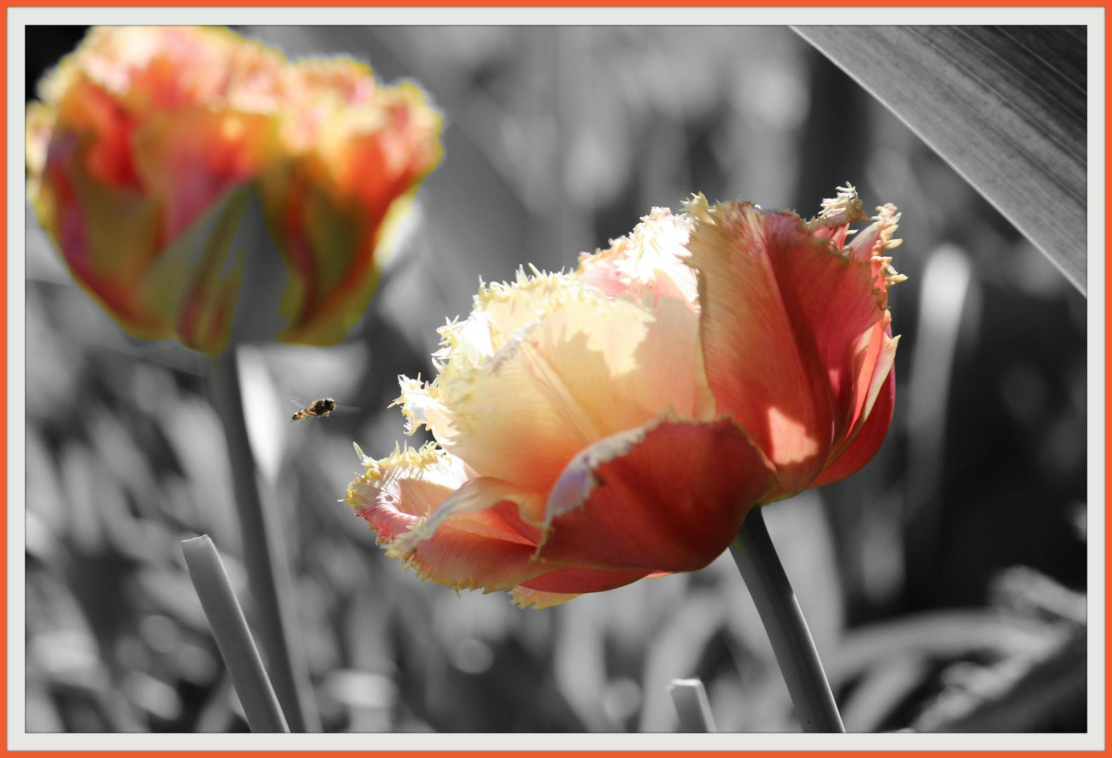 Blumen sind das Lächeln der Erde !!